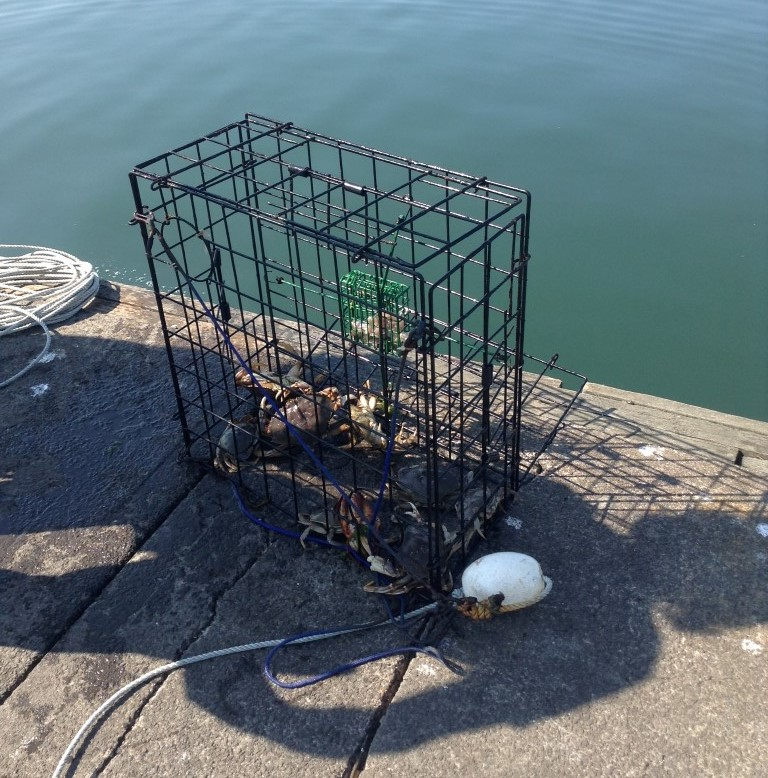 Recreational Crab Fishing-Westport Marina-Docks