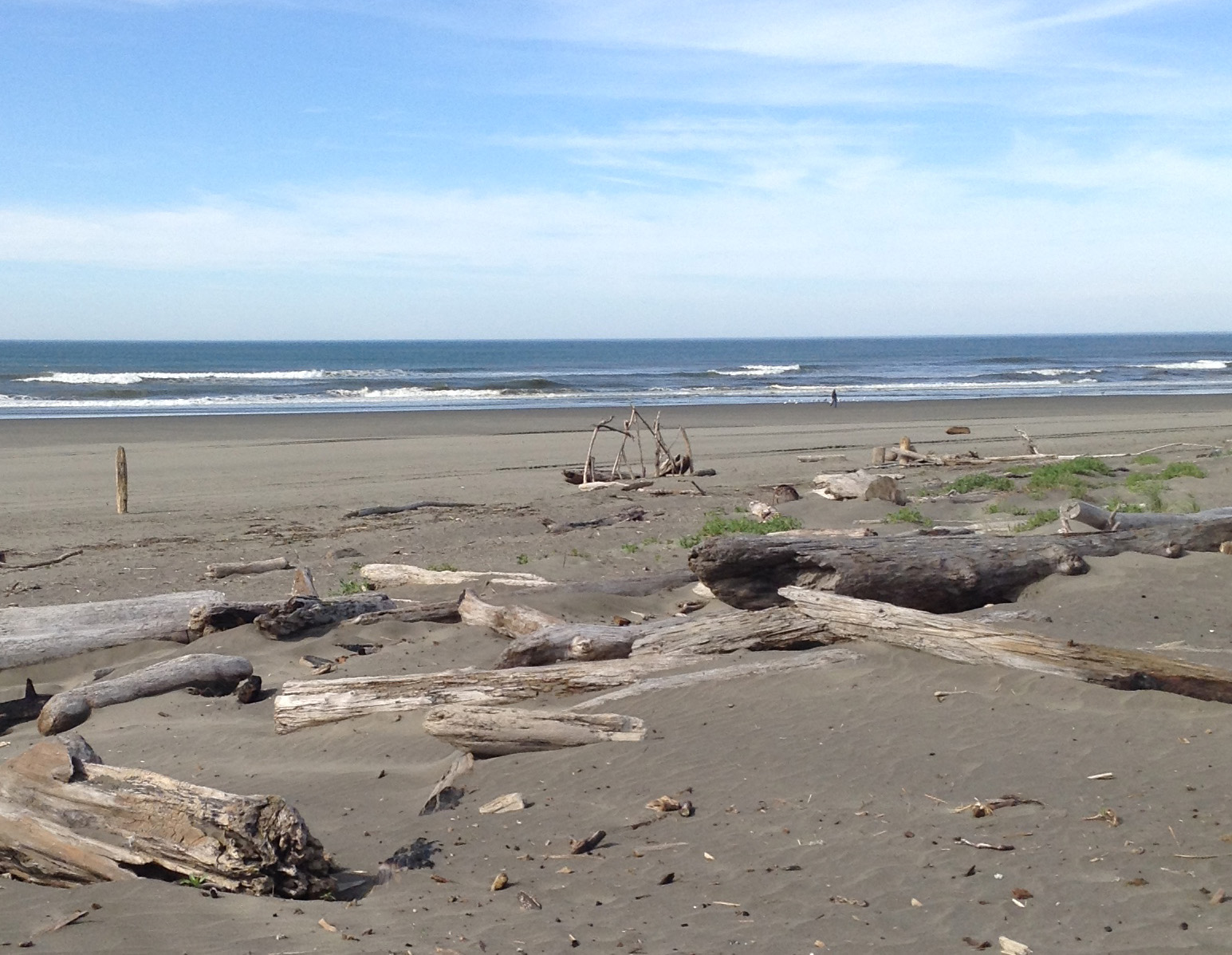 Driftwood at Ocean Shores, WA Pacific Coast.  #graysharborbeaches #pacificcoast #driftwood