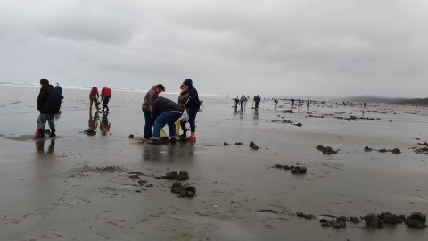 Razor Clam Digging on the Pacific Ocean Near Pacific Beach, WA (Mocrocks) #graysharborbeaches