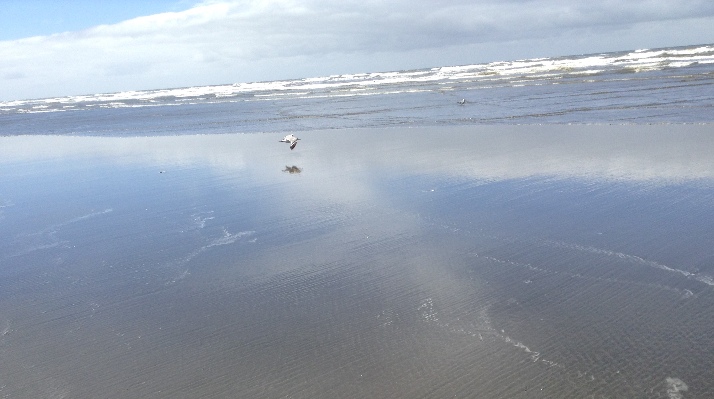 Reflection of seagull over the beach surf of the Pacific Ocean in Ocean Shores WA, USA.