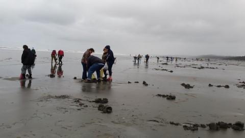 Razor Clam Digging on the Pacific Ocean Near Pacific Beach, WA (Mocrocks) #graysharborbeaches